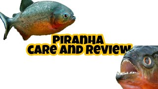 Piranha care and review in tamil