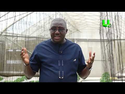 AYEKOO: Deepening Greenhouse Technology In Ghana - PART 1