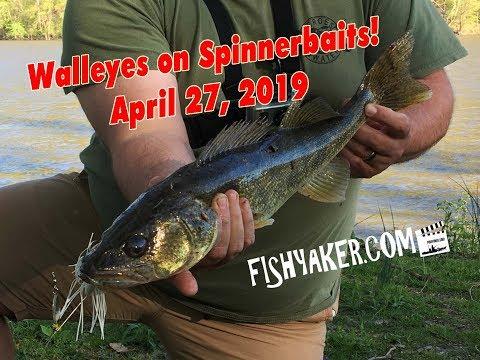 Susquehanna River Walleyes on Spinnerbaits - 4/27/19