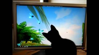 Cat chasing bugs on screen
