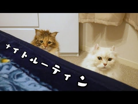べったりな愛猫のナイトルーティン。