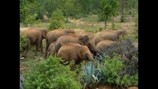 Odisha: Herd of elephants destroy crops, houses in Mayurbhanj