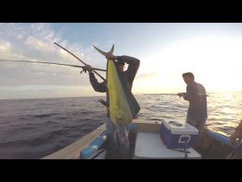Dorado and yellowfin tuna fishing off oceanside for Tuna fishing california