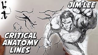 Jim Lee - Critical Anatomy Lines