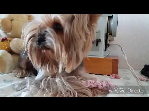 •DIY-ВИДЕО• Как сделать игрушку для собаки 🐶🐕 за 5 минут•!
