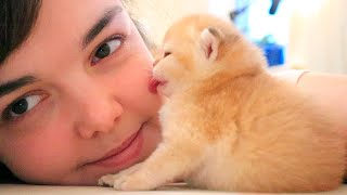 Tiny kitten kisses me 🥰 Relax   ASMR   Too CUTE