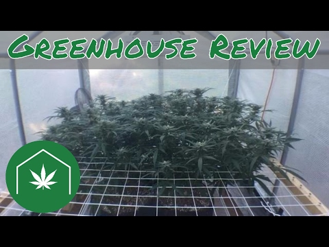 How to Grow Cannabis at Home: Autoflower vs Photoperiod & Different Greenhouse Sizes