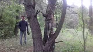 а ваша #собака умеет лазить по деревьям?and your dog can climb trees?