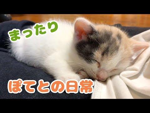 子猫を拾って3日目・ぽてとの日常