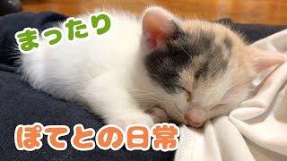 子猫を拾って3日目・ぽてとの日常 thumbnail