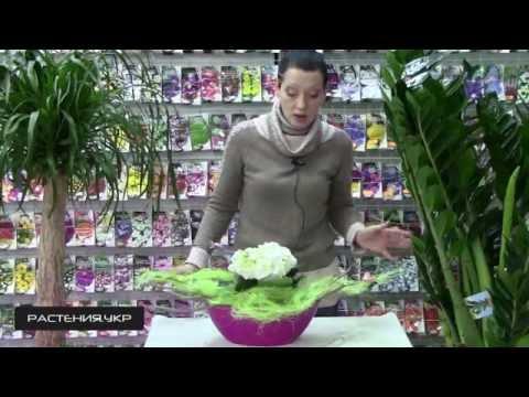 Валенсе заказ и доставка цветов и букетов по Москве