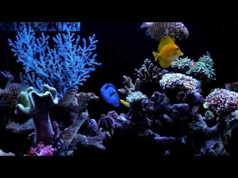 Feeding Monocentridae Pinecone Fish