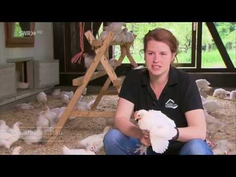 Inga Günther züchtet das Öko-Huhn der Zukunft
