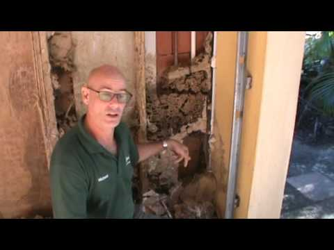Large termite infestation in a house in Byron Bay