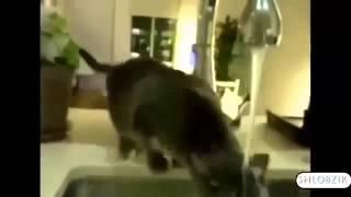 СМЕШНЫЕ КОШКИ Подборка Самых Смешных Видео про Кош