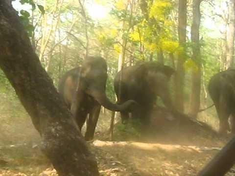 Elephants charging at Nagarhole National Park