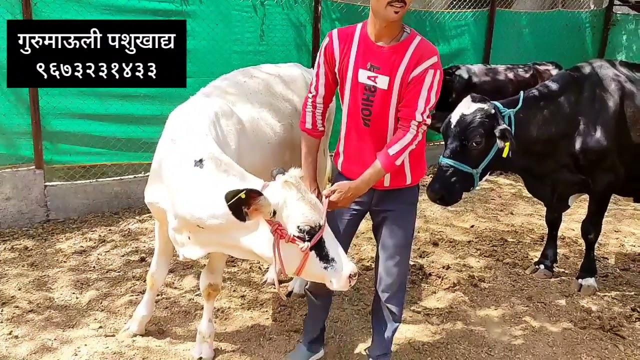 Download Vetrina With Sagar Dighe