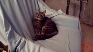 Кот наводит вечерний марафет (полная версия)