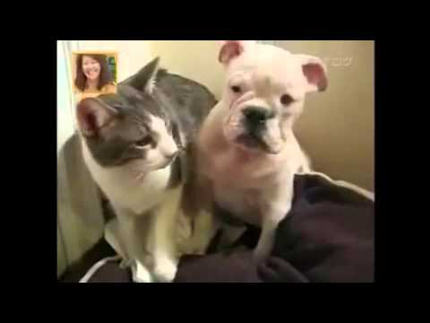 urinary tract infection cat treatment