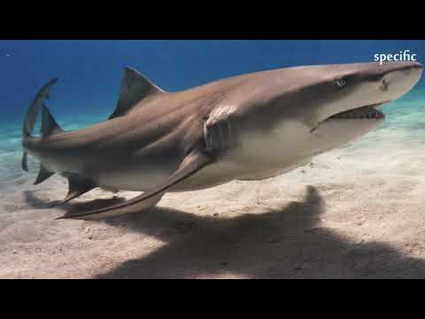 Australia news today  |  Sharks spotted feeding in Gold Coast lake