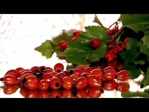 Как заварить шиповник и боярышник
