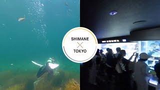 Underwater - SHIMANE