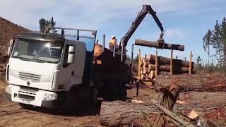 Chile presenta una nueva herramienta forestal basada en la sustentabilidad.