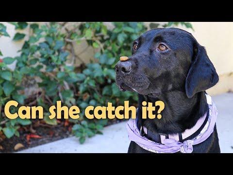 Dog Tricks Gone Wrong!  E23 VIOLETS ADVENTURES