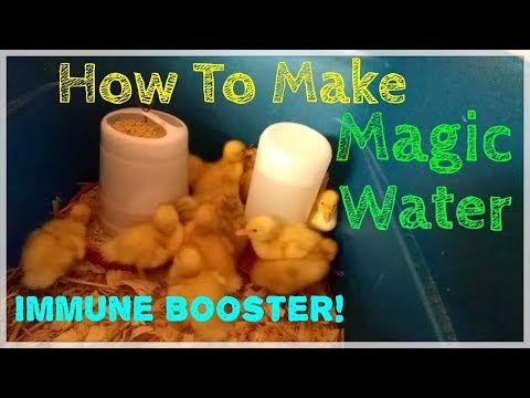 Magic Water | How To Boost Chickens or Ducks Immune System
