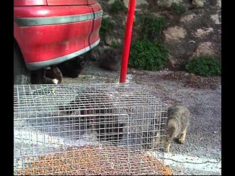 Terremoto L'Aquila-soccorso agli animali abbandonati