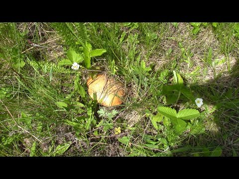 Летом по грибы