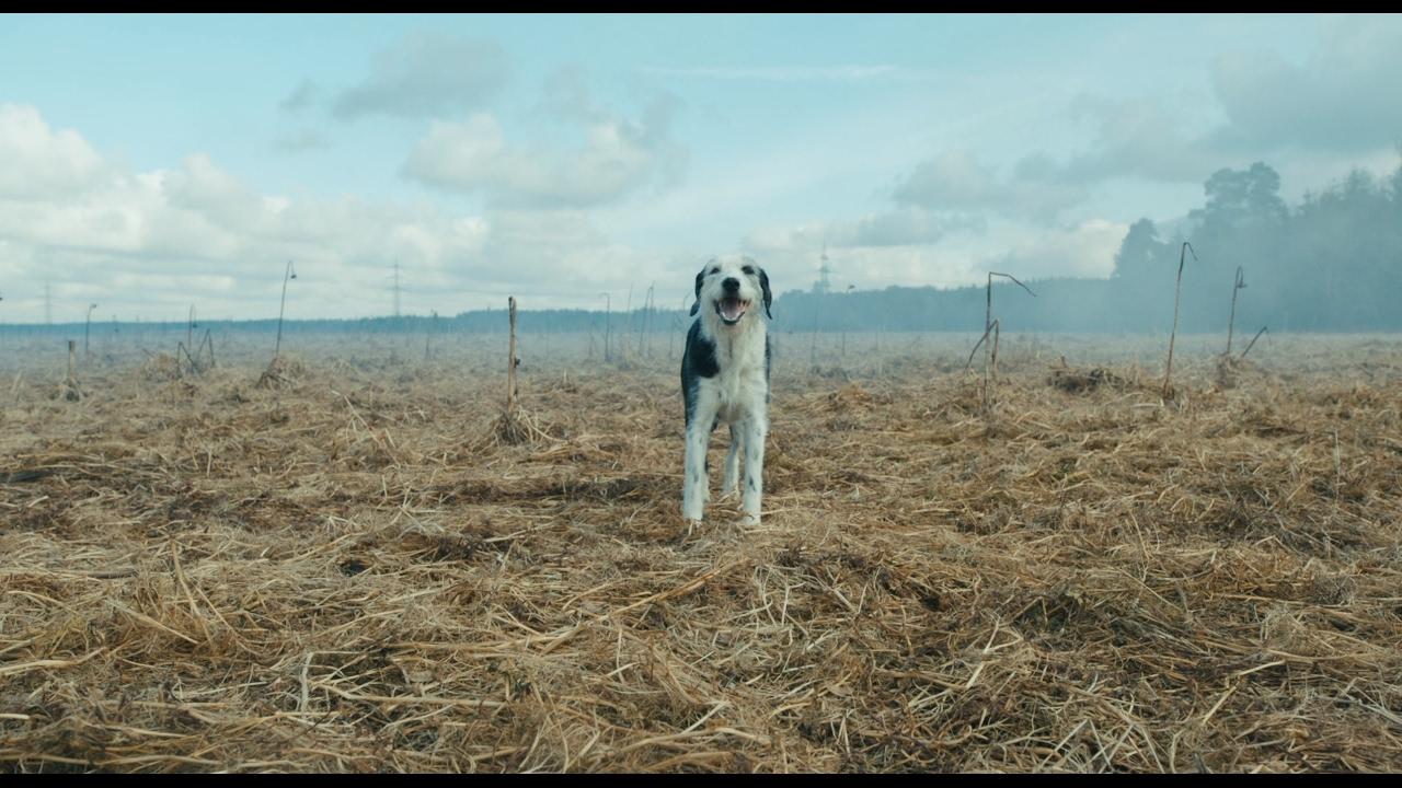Der Hund Begraben