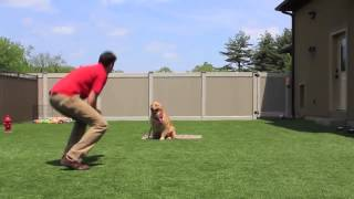 Best Dog Trainers Smart Dogs Training And Lodging Chicago, Il