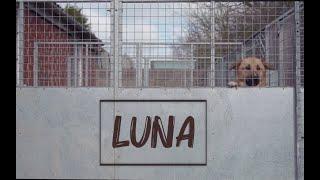 LUNA [short film] - JGE MUSIC