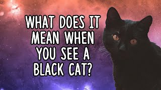 What Does It Mean When You See A Black Cat?