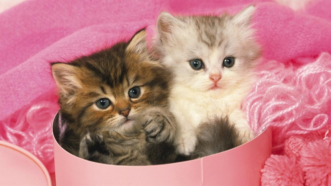 Cute Teacup Kittens Vines Compilation - YouTube
