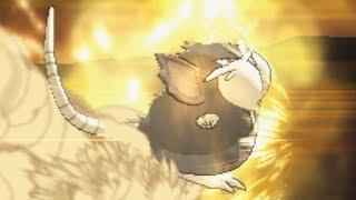 Alolan Raticate Breakin' Necks | Pokemon Ultra Sun & Moon Wifi Battle