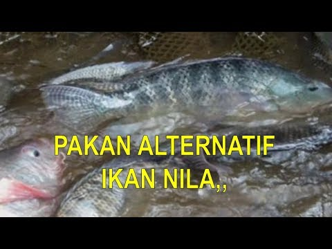 Download 60+ Gambar Kerangka Ikan Nila Terpopuler