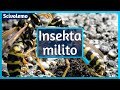 Kiam insektoj militas