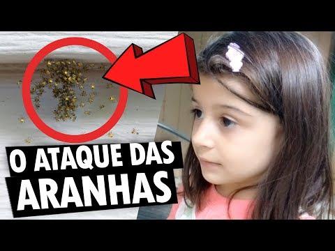ARANHAS INVADIRAM NOSSA CASA NO CANADÁ e muito mais! - Vlog Ep.107
