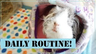 Squeak Dreams: Daily Routine with the Piggies!