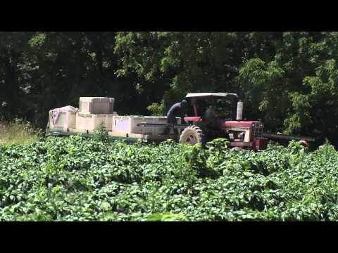 Organic farming, explained