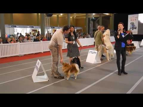 GERMAN SPITZ and KEESHOND at Melbourne Dog Lover Show 2016