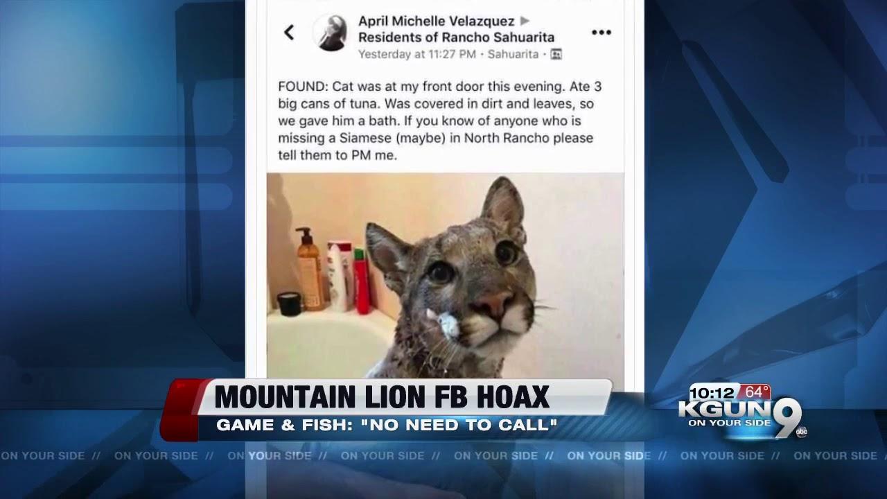 sprzedaż obuwia sprawdzić ekskluzywne buty Viral social media post showing mountain lion in bathtub a hoax