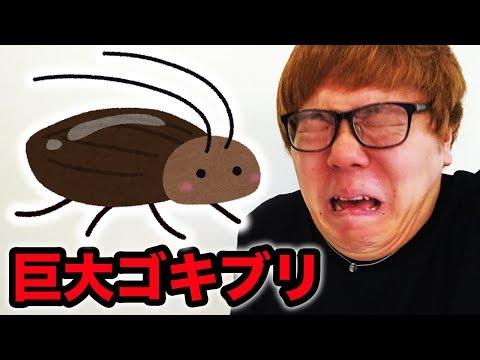 【超閲覧注意】ヒカキン vs 巨大ゴキブリ【2017ver. 】