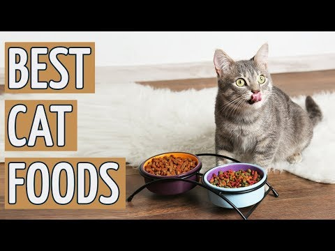 ⭐️ Best Cat Food: TOP 10 Best Cat Foods 2019 REVIEWS ⭐️