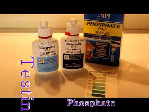 Monday Maintenance Testing the water pH, GH, KH, Phosphates and Nitrates from YouTube · Duration:  4 minutes 11 seconds