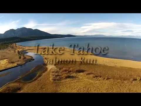 Drone Salmon Run Lake Tahoe -  Dji Phantom vision+