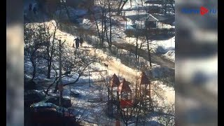 В Курске возле детского сада пенсионер отбил у своры собак женщину с ребёнком