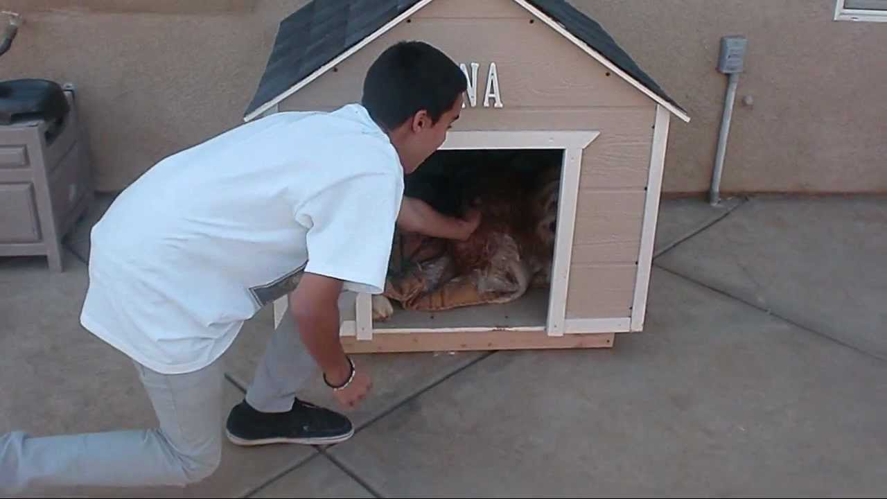 How to build a large dog house youtube - How to build a house frame ideas ...